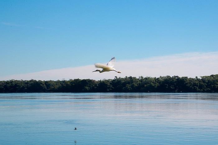 Lei vai garantir preservação do Dourado nos rios do Paraná