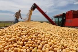 Aumento na produção de grãos e faturamento de produtores, as projeções da CNA para 2019