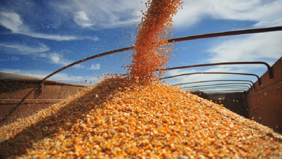 Soja fica mais barata enquanto milho tem alta no preço