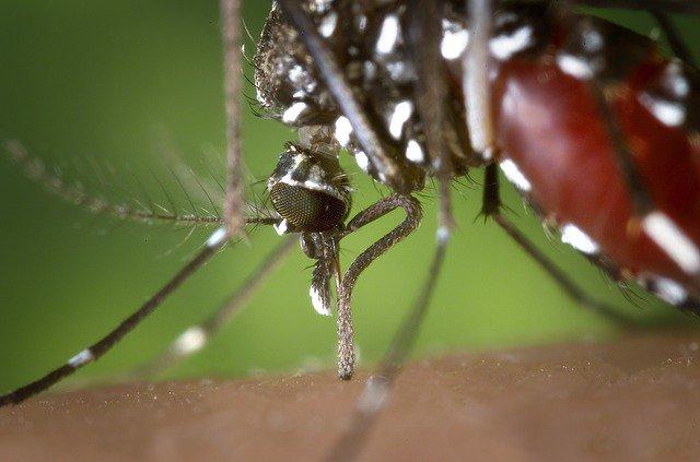Paraná tem mais duas mortes por dengue
