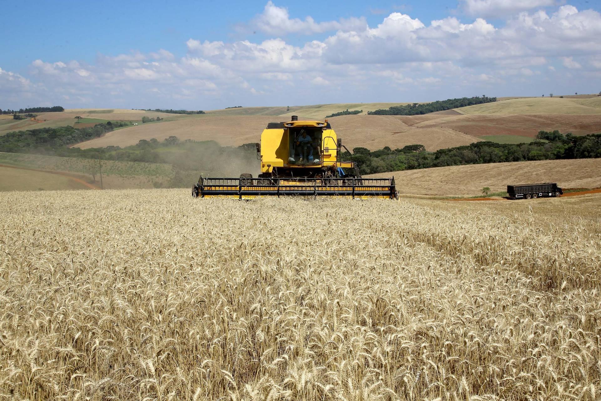 Paraná deverá produzir mais de 36 milhões de toneladas de grãos