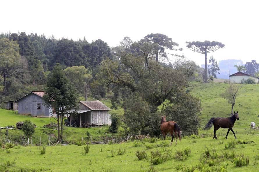 IAP orienta proprietários a acompanharem o Cadastro Ambiental Rural