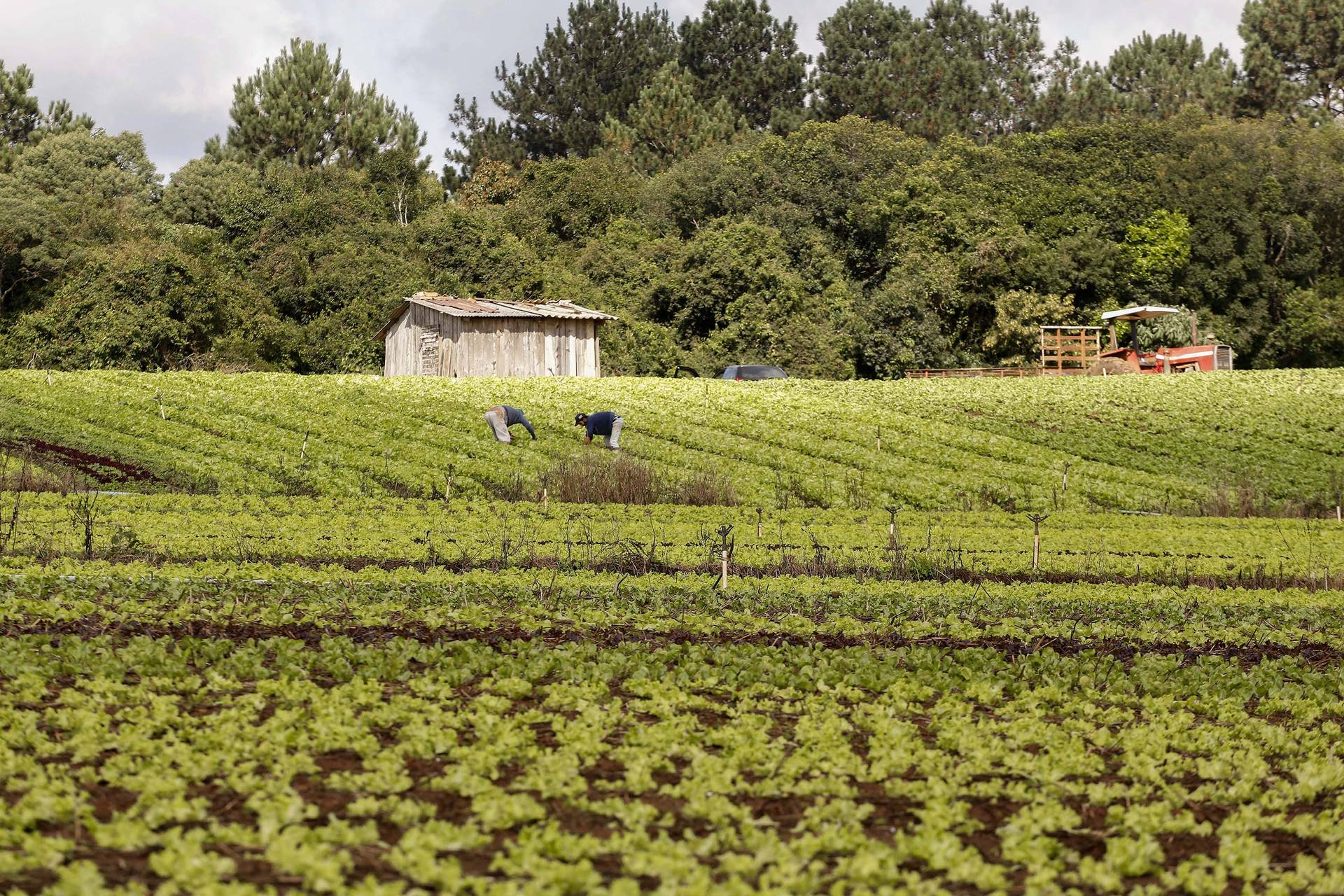Governo vai focar ações na agricultura familiar