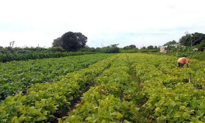 CMN eleva limite de crédito para associados de cooperativas rurais