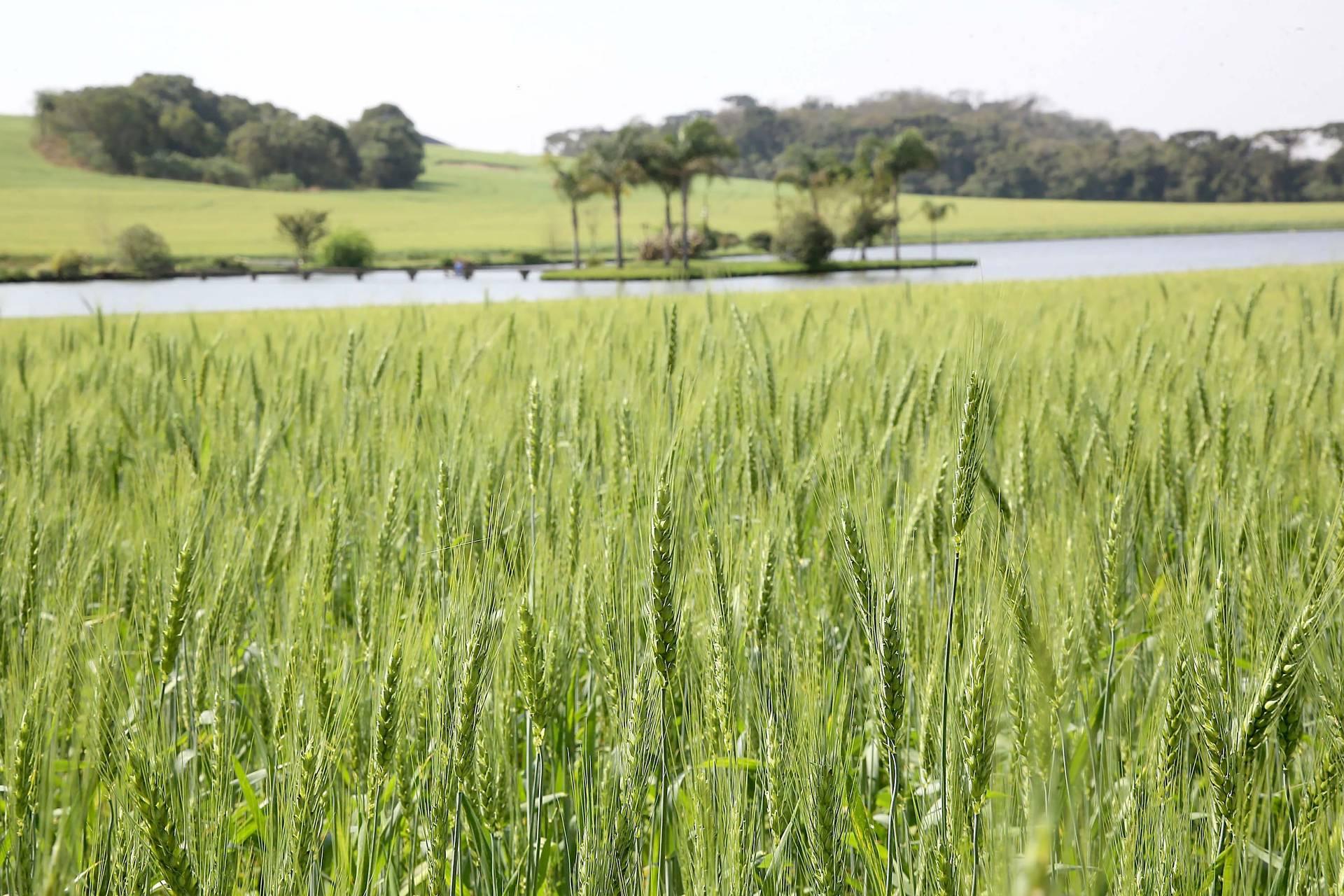 Agricultura reforça importância do seguro rural para o produtor