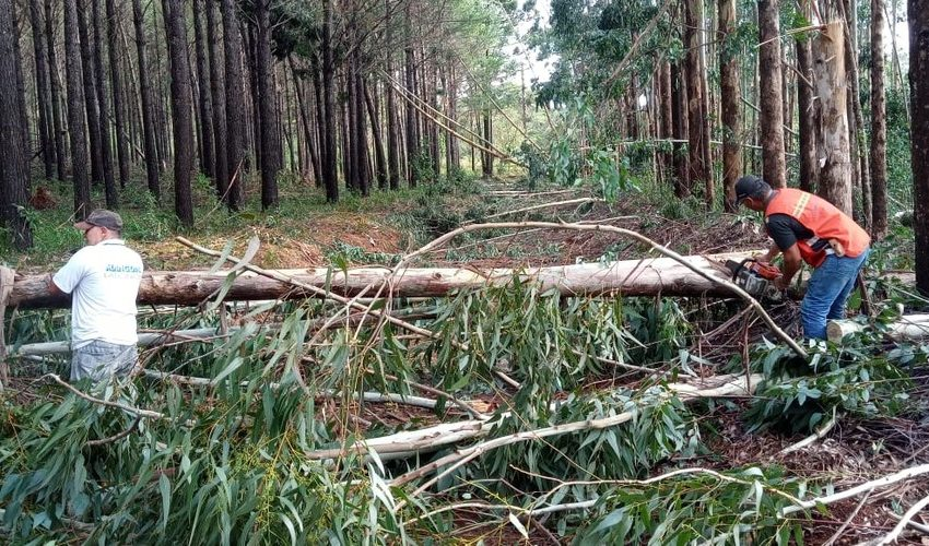 Vendaval derruba árvores e destelha casas em Bituruna