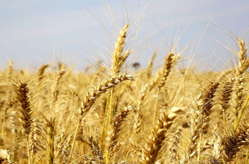Paraná vai colher mais de 41 milhões de toneladas de grãos