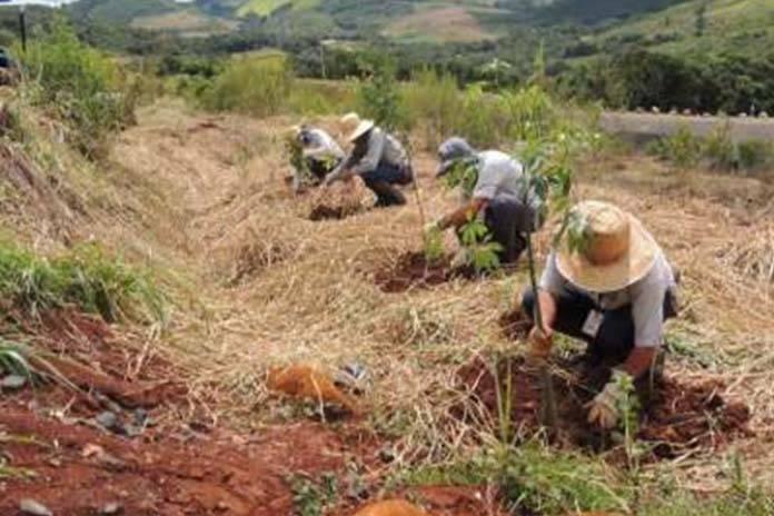 Paraná é premiado por projeto de recuperação de áreas degradadas