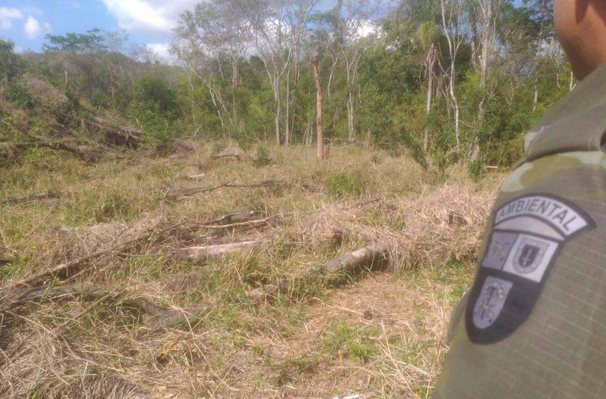Multas por crimes ambientais somam R$ 2,5 milhões em oito dias