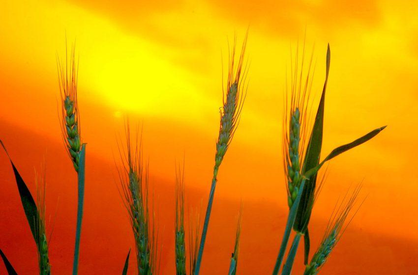 Relatório mostra que chuvas ainda são insuficientes para a agricultura