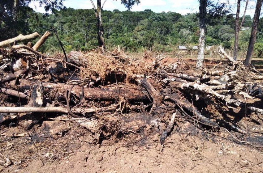 Homem é multado em 56 mil reais em Prudentópolis por destruição de vegetação nativa