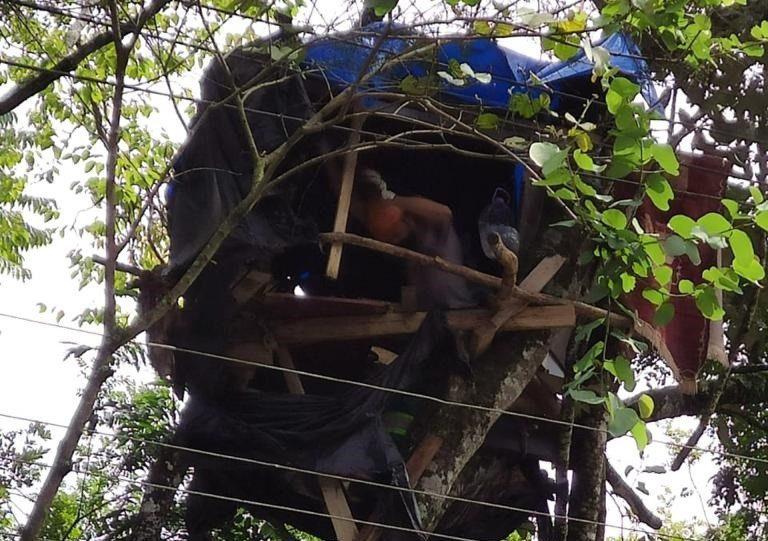 São-mateuense constrói casa na árvore na avenida de Curitiba