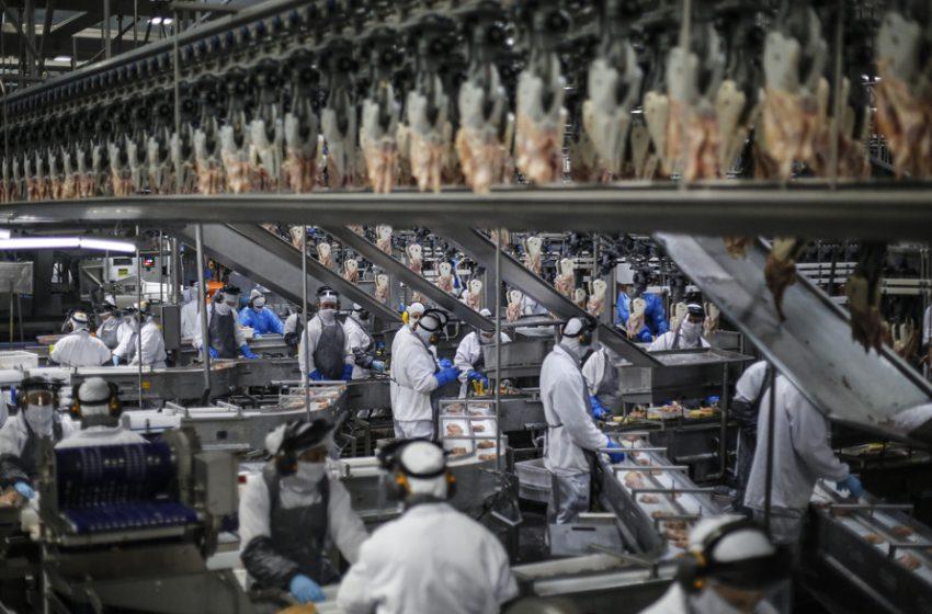 Paraná produz um terço da carne de frango do Brasil