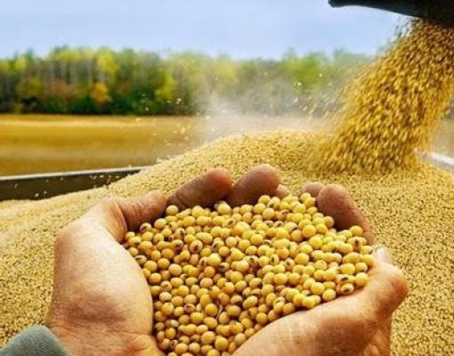 Agricultura: Soja ocupa um quarto do território estadual