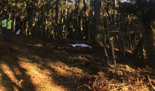 Homem morre após cair de pinheiro com 15 metros de altura