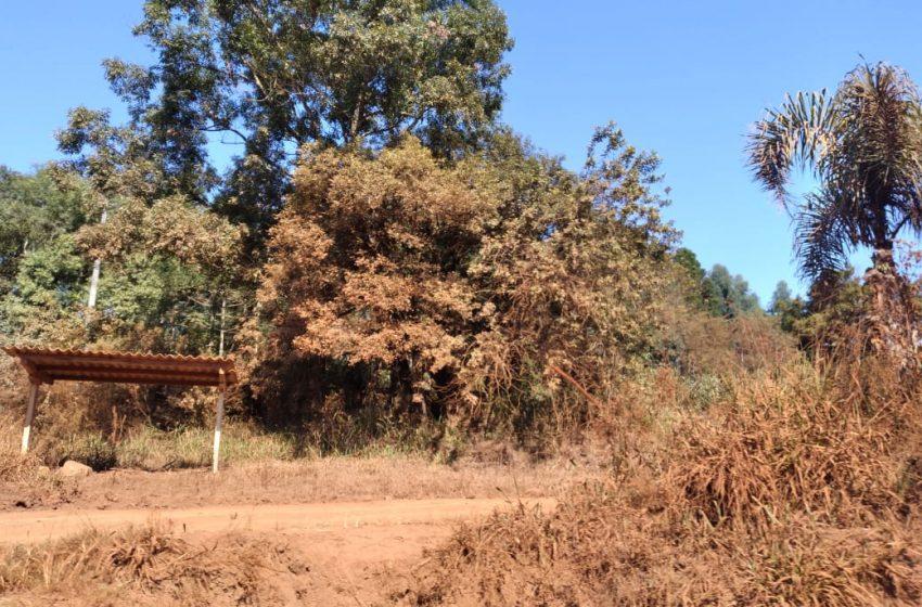Clima seco faz aumentar sintomas de alergia à poeira