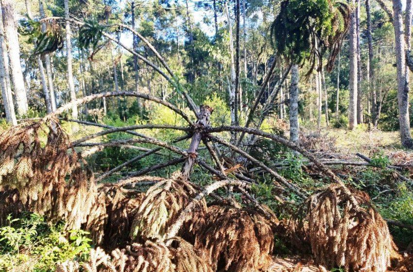 Polícia ambiental multa em mais de 17 mil reais infrator de São Mateus do Sul