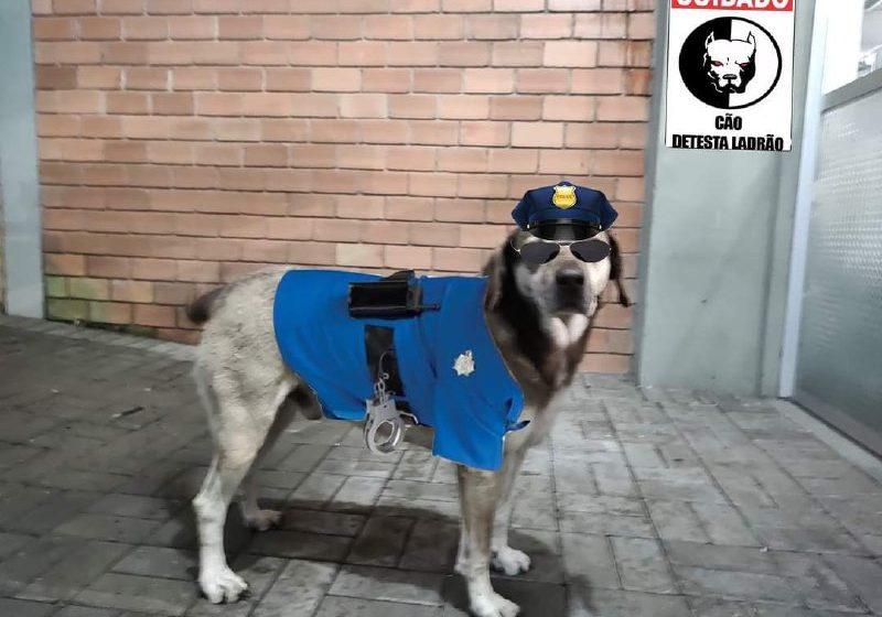 """Cãozinho """"Piá"""", ajuda policial a prender ladrão em Porto União"""