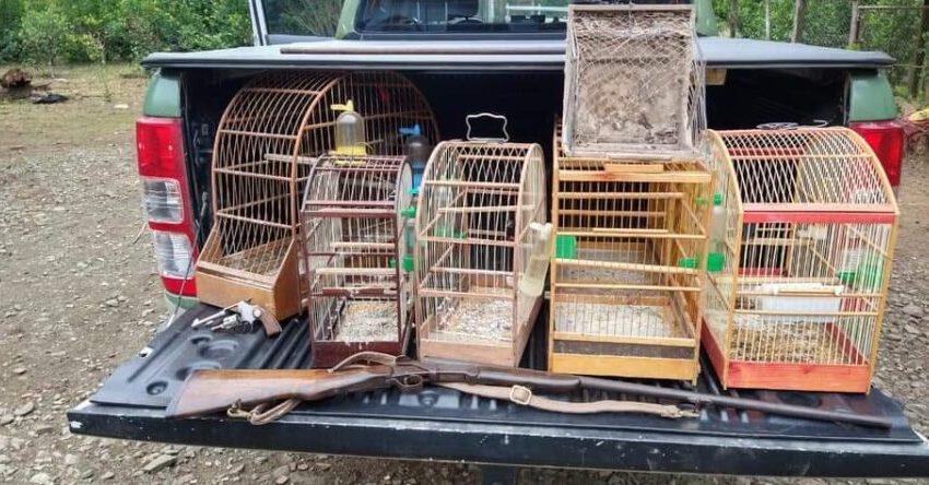 Polícia Ambiental encontra cativeiro de aves em Três Barras
