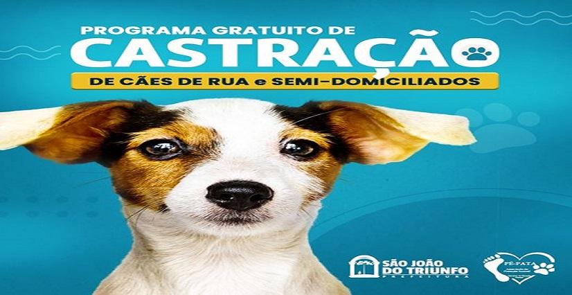 Programa de castração de fêmeas caninas já beneficiou mais de 100 animais em São João do Triunfo
