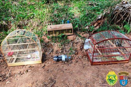 Duas pessoas são presas em flagrante por pesca e transporte de pássaros silvestres