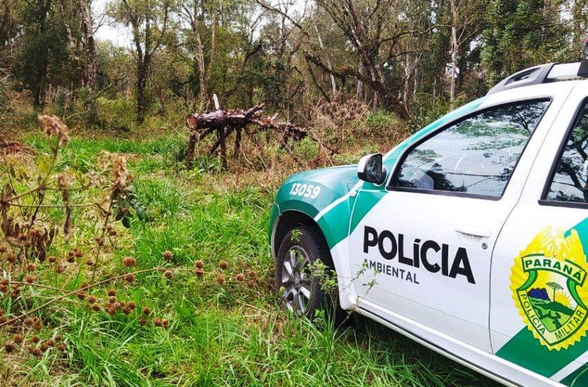 Homem é multado em R$ 65.300,00 em São Mateus do Sul