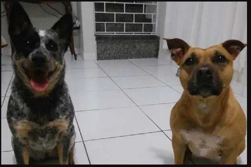 Mistério: no Paraná donos vão ao mercado e na volta não encontram mais os cães da família