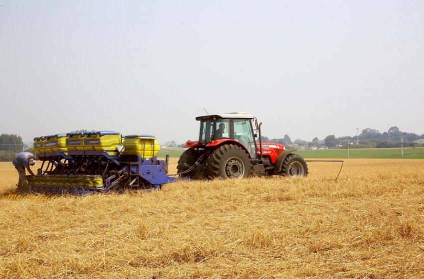 Produtores de milho começam plantio da primeira safra, com projeção de colher 4,1 milhões de toneladas no PR