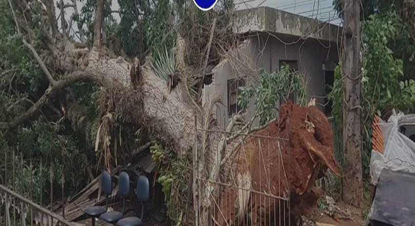Árvore cai sobre casa onde haviam crianças dentro, no PR
