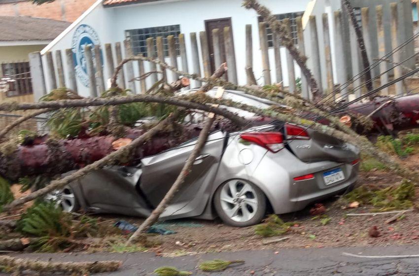 Após ventania árvore esmaga carro em frente ao CMEI em PG