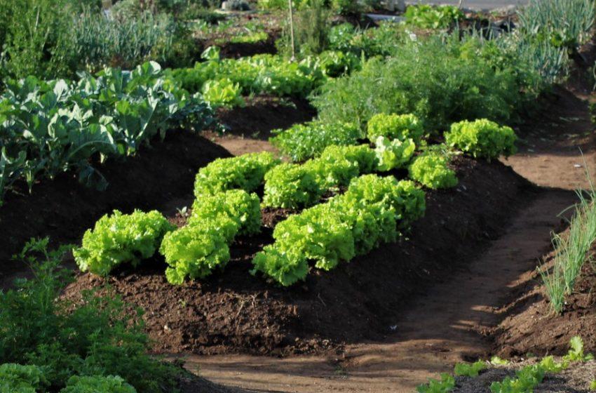Cartilha Horta como Hobby II é lançada no Paraná motivando o cultivo da horta em casa