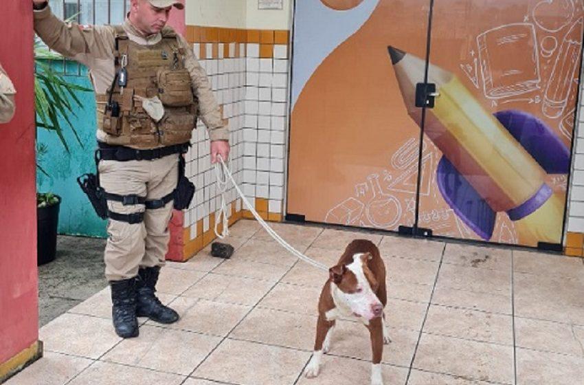 Pitbull ataca estudantes dentro de escola em Porto União e fere quatro adolescentes