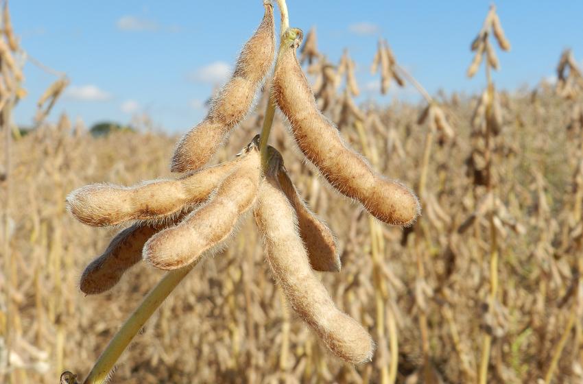 Fatores externos e maior área plantada podem influenciar preço da soja no Brasil